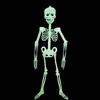 Скелет-конструктор светонакопительный средний