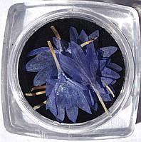Сухоцветы для дизайна ногтей RENEE IF06-12