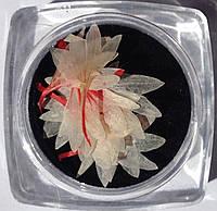 Сухоцветы для дизайна ногтей RENEE IF06-04