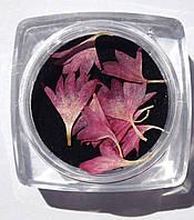 Сухоцветы для дизайна ногтей RENEE IF06-02