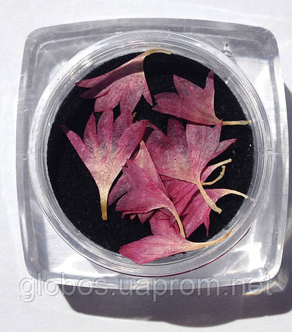 Сухоцветы для дизайна ногтей RENEE IF06-02, фото 2