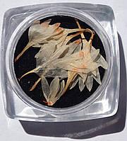Сухоцветы для дизайна ногтей RENEE IF06-03