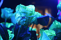 Светящаяся краска Noxton для живых цветов
