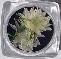 Сухоцветы для дизайна ногтей RENEE IF06-07