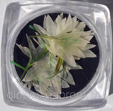 Сухоцветы для дизайна ногтей RENEE IF06-07, фото 2