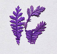 Сухоцветы для дизайна ногтей RENEE IF08-05
