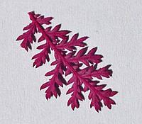 Сухоцветы для дизайна ногтей RENEE IF08-03