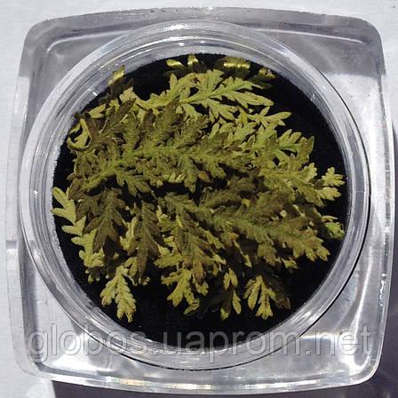 Сухоцветы для дизайна ногтей RENEE IF08-06, фото 2
