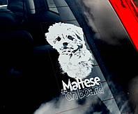 Мальтиец (Мальтийская болонка) (Мальтезе) стикер
