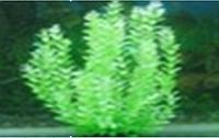 Пластиковое растение для аквариума  50-52 см 097524