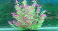 Пластиковое растение для аквариума 50-52 см 097525