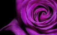 Пигмент жидкий, фиолетовый Швейцария