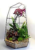 """Флорариум с орхидеей """"Кристалл"""": высота -40 см, ширина -26 см"""