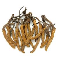 Кордицепс китайский (Cordyceps sinensis)