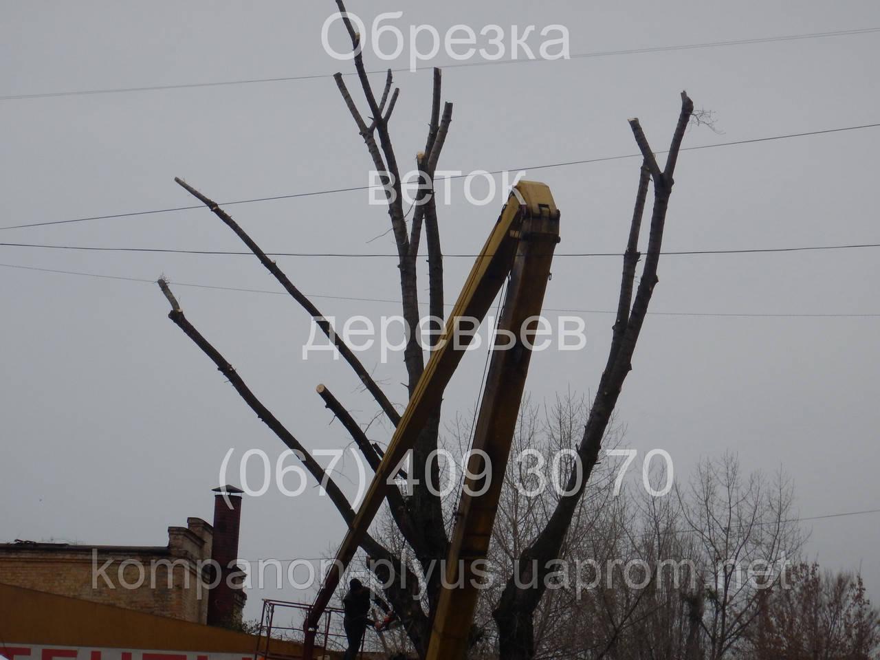 Обрізка гілок дерев