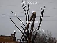 Обрізка гілок дерев, фото 1