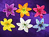 Пресс лилия атлас (6 цв)