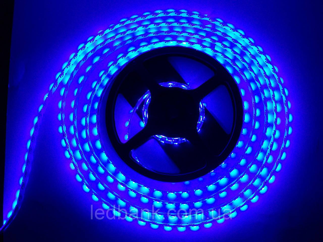 """Светодиодная лента SMD 3528 120 LED/m IP20 синяя - Интернет-магазин """"LEDBANK"""" - светодиодное освещение в Киеве"""