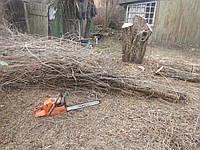 Удаление старых деревьев Удаление сложных деревьев Удаление старых плодовых деревьев