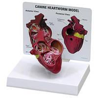 Собачье сердце с червем