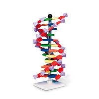 Современная модель ДНК miniDNA™ (12 слоев)