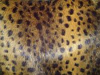 Мех Корея леопард