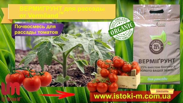 грунт для рассады_почвосмесь для рассады_грунт для рассады овощей купить_грунт для рассады томатов_грунт для рассады купить оптом от производителя_грунт для рассады огурцов_грунт для рассады перца_грунт для рассады помидоров в домашних условиях_грунт для рассады купить_грутн для рассады цена_вермигрунт для рассады цена_вермигрунт для рассады купить_вермигрунт для рассады отзывы_вермигрунт для рассады 7л_вермигрунт золото вашей земли_почвосмесь для рассады_почвосмесь для рассады купить_почвосмесь для рассады томатов_почвосмесь для рассады перца_почвосмесь для рассады огурца_почвосмесь для рассады капусты_почвосмесь для рассады клубники_почвосмесь для рассады земляники_купить почвосмесь для рассады_вермигрунт_вермигрунт универсальный_вермигрунт купить_вермигрунт для рассады_вермигрунт золото вашей земли_вермигрунт отзывы_вермигрунт универсальный состав_органическое удобрение_органические удобрения купить_огранические удобрения_органическое удобрение 5 букв_виды органических удобрений_характеристика органических удобрений_применение органических удобрений_производство органических удобрений_органические удобрения их виды и характеристика_органические удобрения растений_органические удобрения для огорода_использование органических удобрений_органическое удобрение 5 букв сканворд_удобрения органические_органические удобрения отзывы_активное органическое удобрение_внесение органических удобрений в почву_органические удобрения для рассады_удобрения органические цена_купить удобрение_удобрение применение_удобрение опт_удобрение производитель_удобрение цена_грунт для зимнего сада_органический грунт для зимнего сада_органическое удобрение для зимнего сада_органическое удобрение для цветов и кустарников_органическое удобрение для пальм_органическое удобрение для кустов_органическое удобрение для домашних цветов_органическое удобрение для комнатных цветов