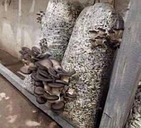 Дропшиппинг. Сотрудничество по продукции грибоводтсва.