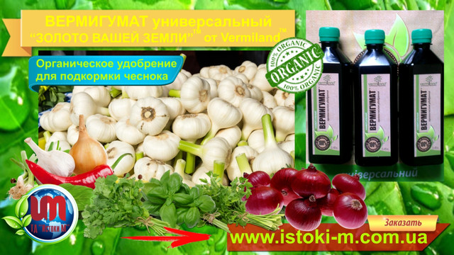 подкормка лука_удобрение для подкормки лука_жидкое органическое удобрение для подкормки лука