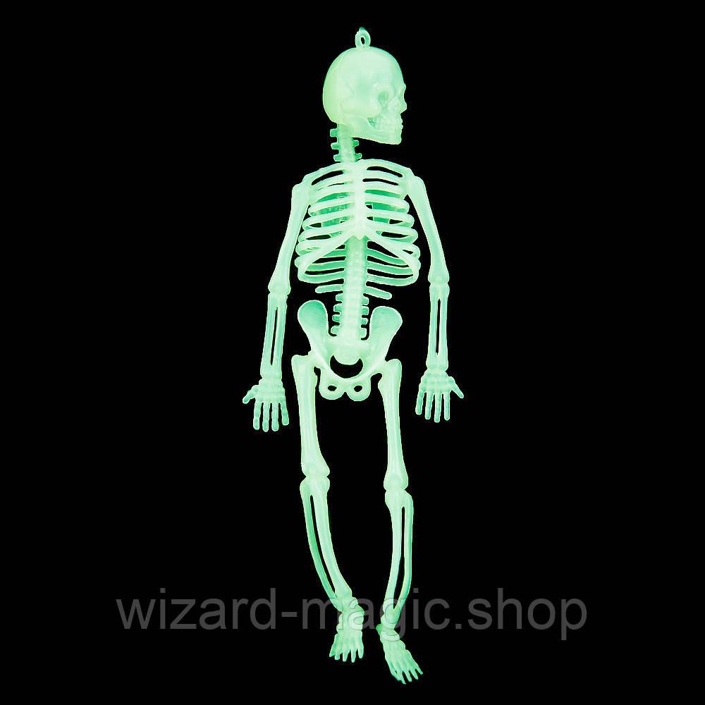 Скелет светонакопительный (20см)