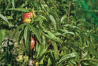Сетка от птиц (3м*5м) защитная на деревья, кустарники, виноградники