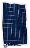 Сонячний фотомодуль Trina Solar TSM-PD05 260 Вт, фото 1