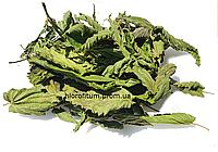Крапива двудомная листья 100 грамм (Urtica dioica)