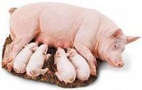БВМД для лактирующих свиноматок 20%
