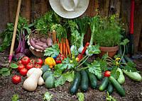 Разгар сезона овощей открытого грунта