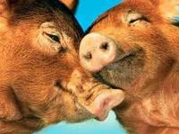 Премикс для быстрого откорма свиней, Германия(гровер-финиш -2,5%)