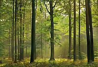 Фотообои бумажные на стену 366х254 см 8 листов: природа, Осенний лес