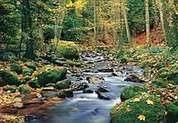 Фотообои бумажные на стену 366х254 см 8 листов: природа, Ручей в лесу