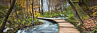 Фотообои бумажные на стену 366х127 см 4 листа: природа, Дорога в лесу