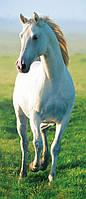 Фотообои бумажные на дверь 86х200 см 1 лист: Белый конь