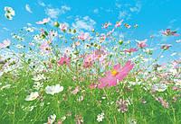 Фотообои бумажные на стену 366х254 см 8 листов: Полевые цветы
