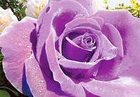 Фотообои бумажные: УЛЬТРАФИОЛЕТ Роза, изделие (ширина 140см высота 97см) из 4 листов