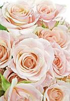Фотообои Цветы, Розовые Розы, Люкс,144*207 см , 9 листов