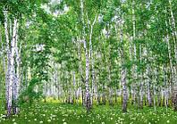 Фотообои Пейзажи, Берёзовый Гай, Люкс,207*144 см , 9 листов