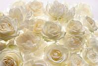 Фотообои флизелиновые на стену 368х248 см 4 листа: Белые розы. Komar XXL4-007