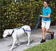 Поводок для Собак 30 кг The Instant Trainer Leash, фото 4