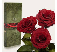 Три долгосвежих розы Багровый Гранат в подарочной упаковке
