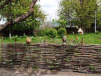 Плетеный забор из лозы высота 1 метр