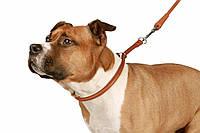 Кожаный ошейник удавка для собак от Collar + адресник с гравировкой