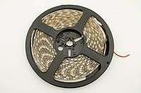 LED лента теплый белый SMD 5050 60 д/м, 5 м, IP65